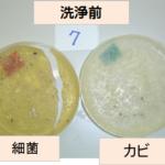 82 エアコン洗浄後の細菌検査、シャレー培地法